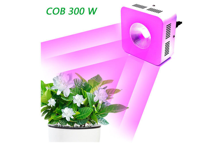 600mA COB Full Spectrum LED Grow Lights 300 W Dustproof 50,000 Hours Lifespan